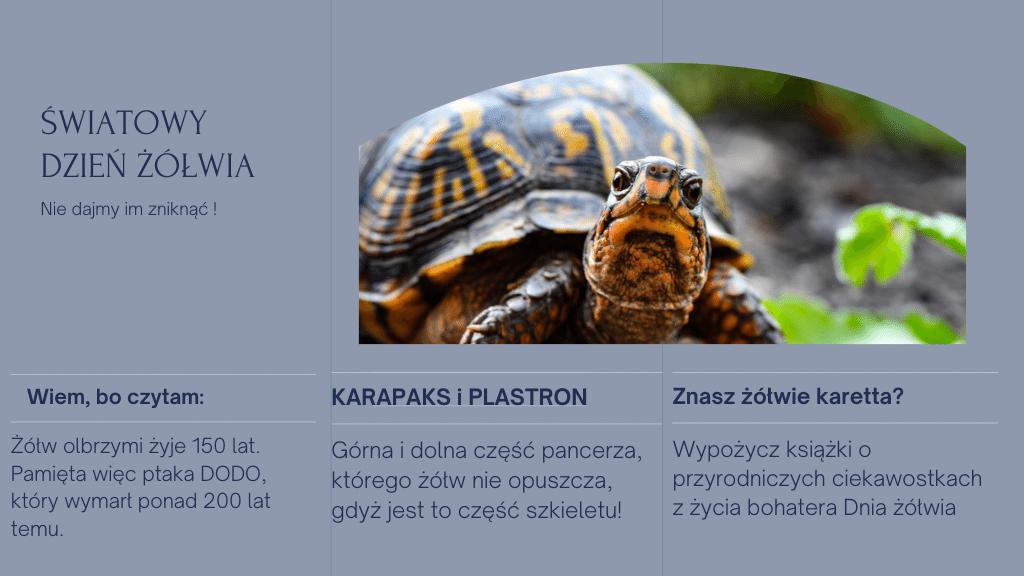 Światowy Dzień Żółwia